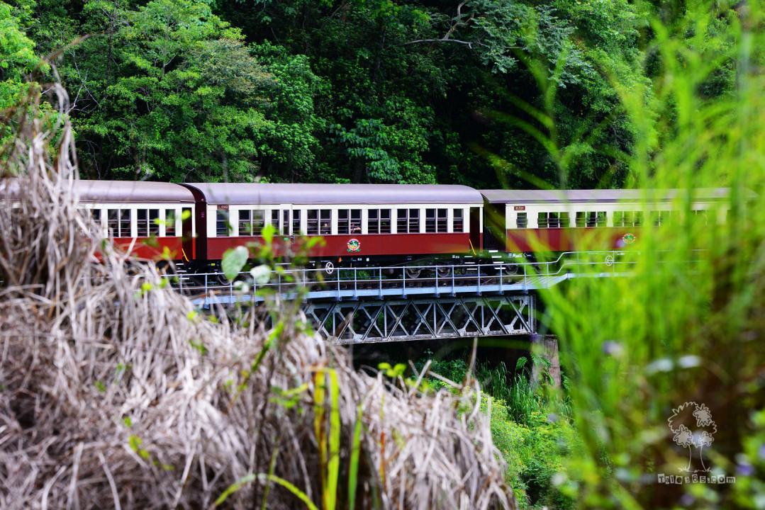 2014发现澳洲 – 热带雨林